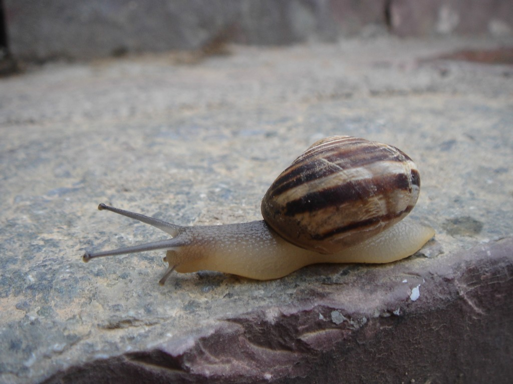 just_snail
